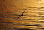 هماهنگی مرغ دریایی
